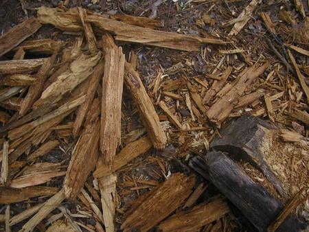 maderas.jpg