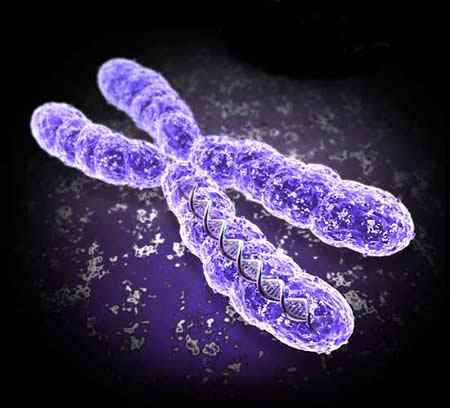 Cromosoma humano - Imagen de isftic.mepsyd.es