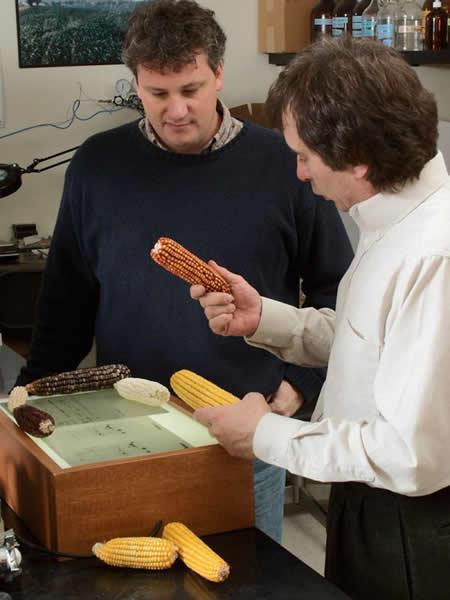 Investigadores comparando distintos tipos de maíz – Imagen de la Universidad de Illinois