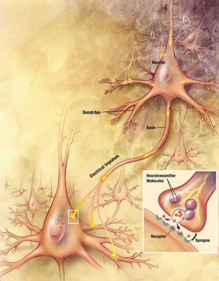 Ilustración de una sinapsis neuronal - Imagen de la Wikipedia