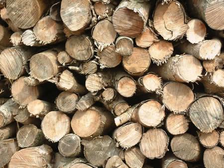 Troncos de árboles talados, nueva fuente ecológica, limpia y eficiente de energía - Imagen de pedroreina.net
