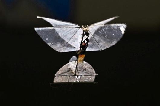 Mariposa robot