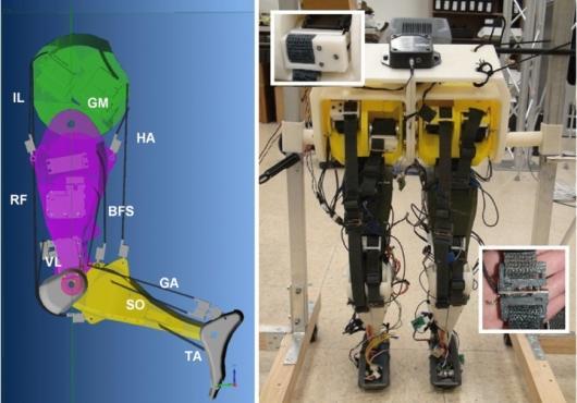 Piernas robóticas