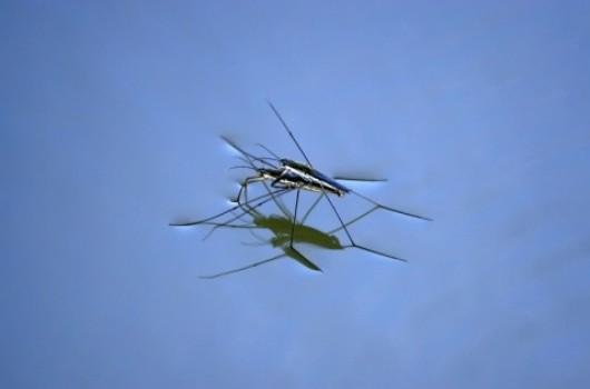 Insecto venciendo la tensión superficial