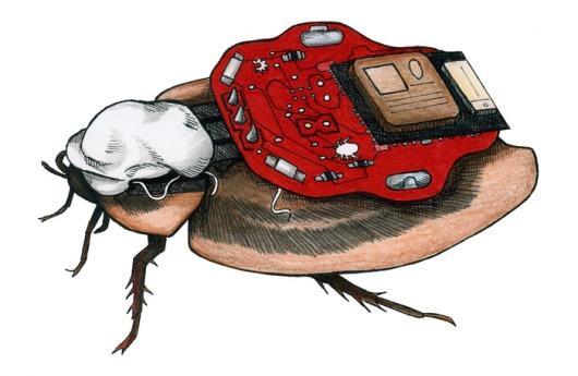 Cucaracha radiocontrolada