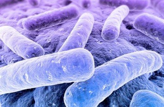 Bacterias de septicemia