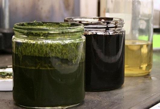 Petróleo de las algas