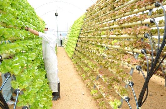 Una pequeña parte de la agroindustria