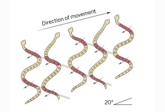 Desplazamiento de las sepientes