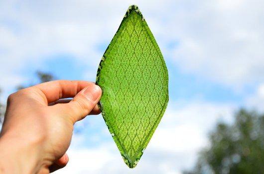 hoja-vegetal-sintetica