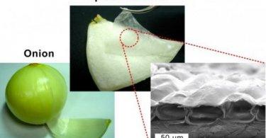 musculo-artificial-cebolla
